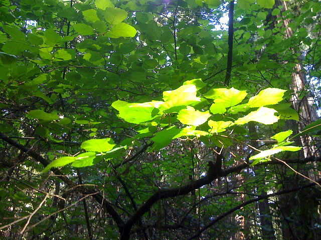Events photo image of sunlight on leaves reaching up in the forest
