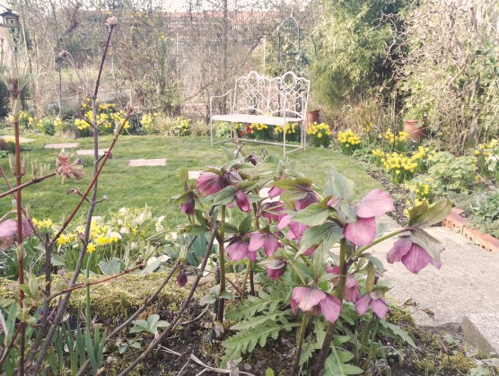 The garden yawns and wakes up for the year ahead