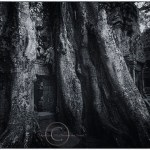Roots of banyan tree grow over a temple in Siem Riep