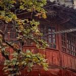 China: autumn colors