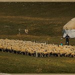 Kazakh nomads with sheep herd and yurt