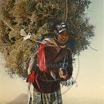 Berber girl carries a huge load of firewood on her back