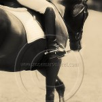 dressage rider on collected horse
