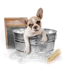 Free Pet Wash
