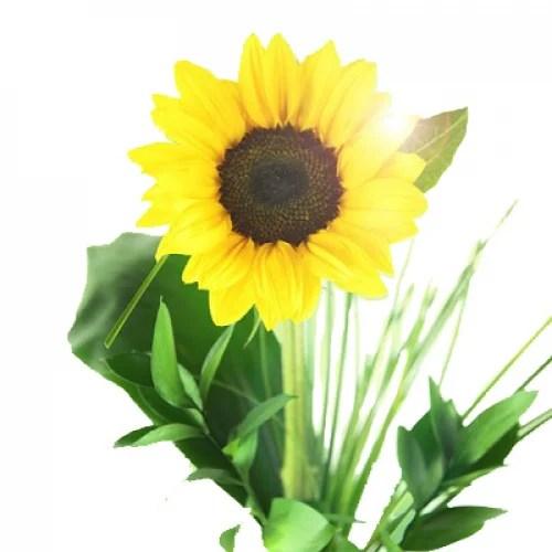 Sonnenblume Verschicken