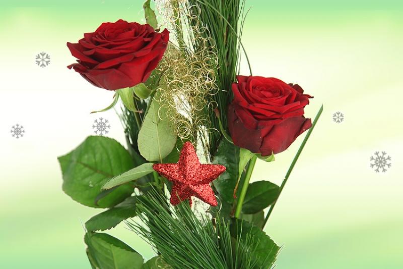Blumen zu Weihnachten  Rote Edelrosen  Rosenbote