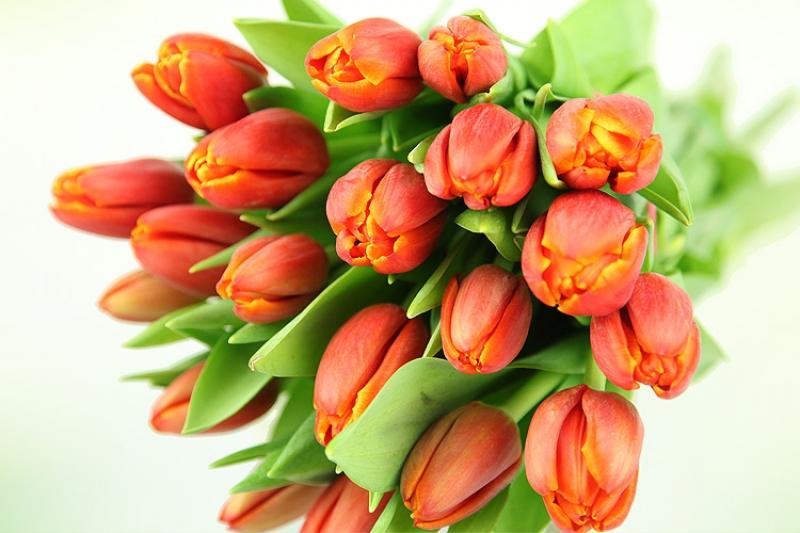 Rote Tulpen  Rosenbote
