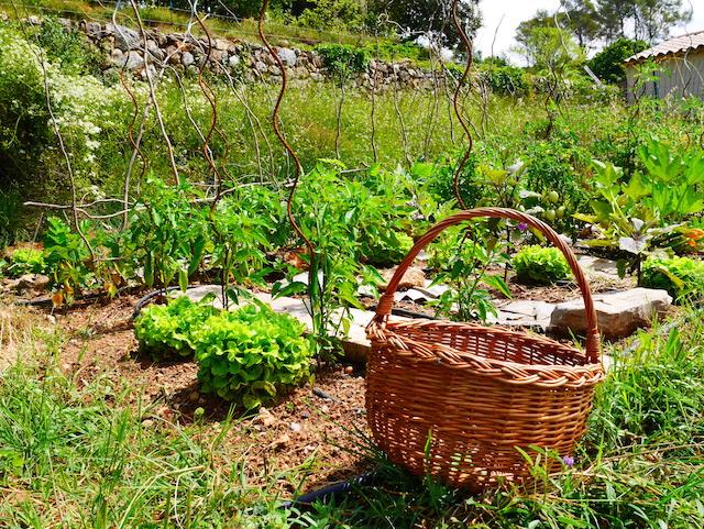 Potager Provençal #2 le secret…