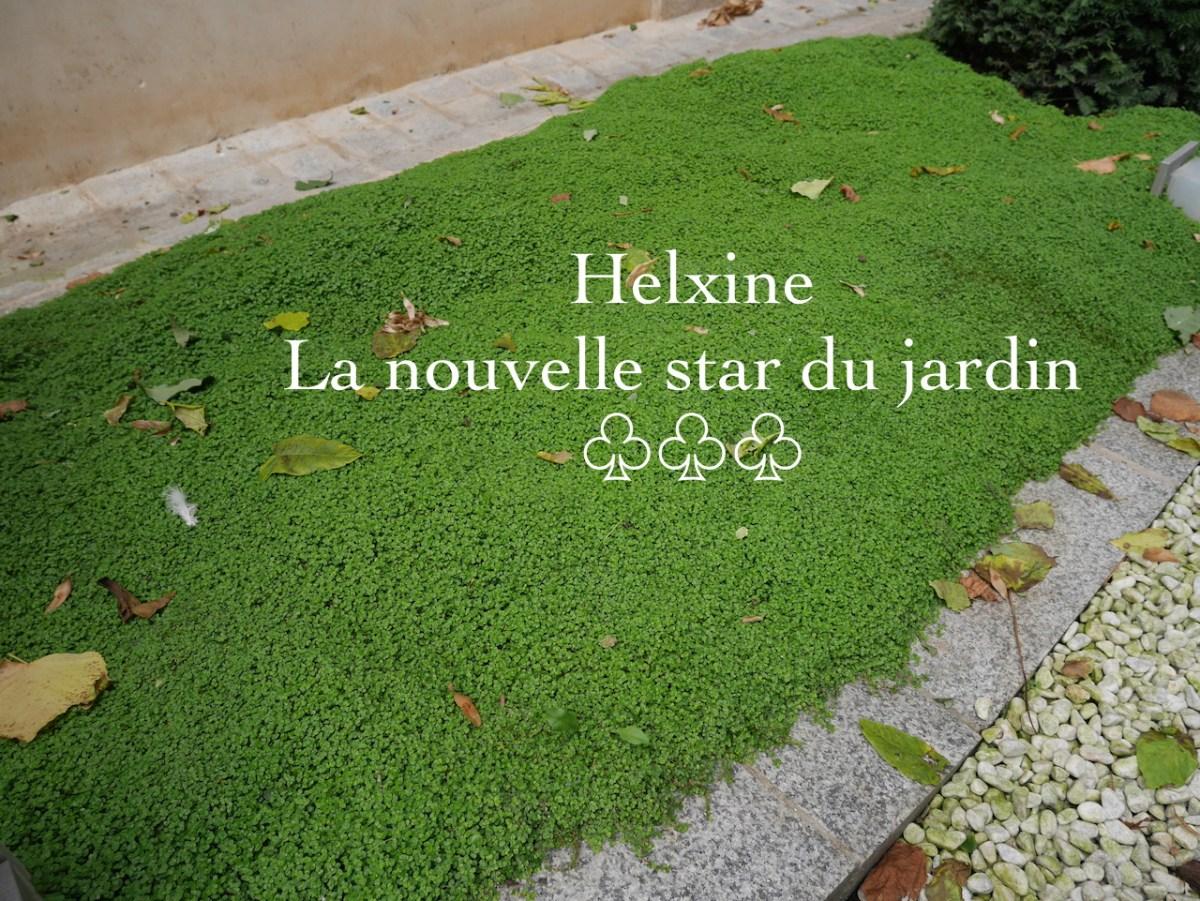 L'helxine couvre-sol pour jardin tendance.
