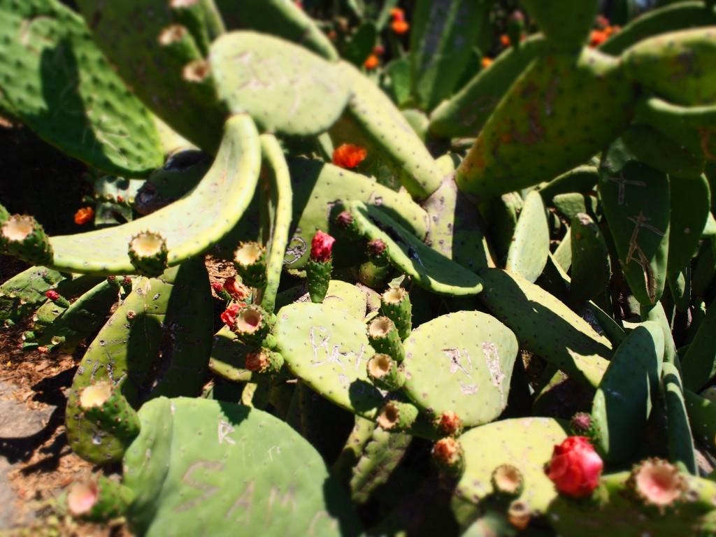 nature_vert_cactus_park_espagne