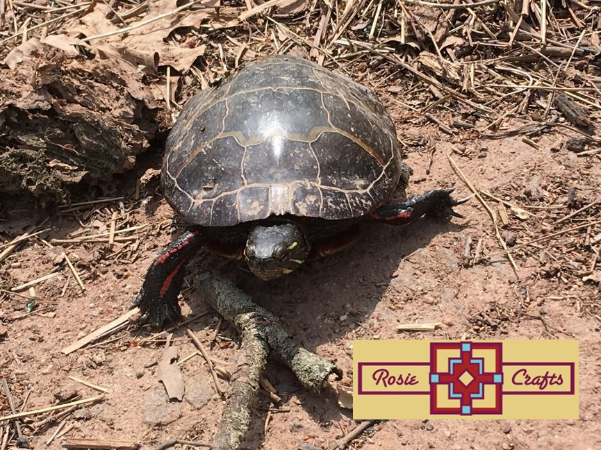 Rosie Crafts Eastern Painted Turtle Photography