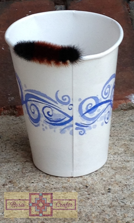Rosie Crafts Wooly Bear Photography