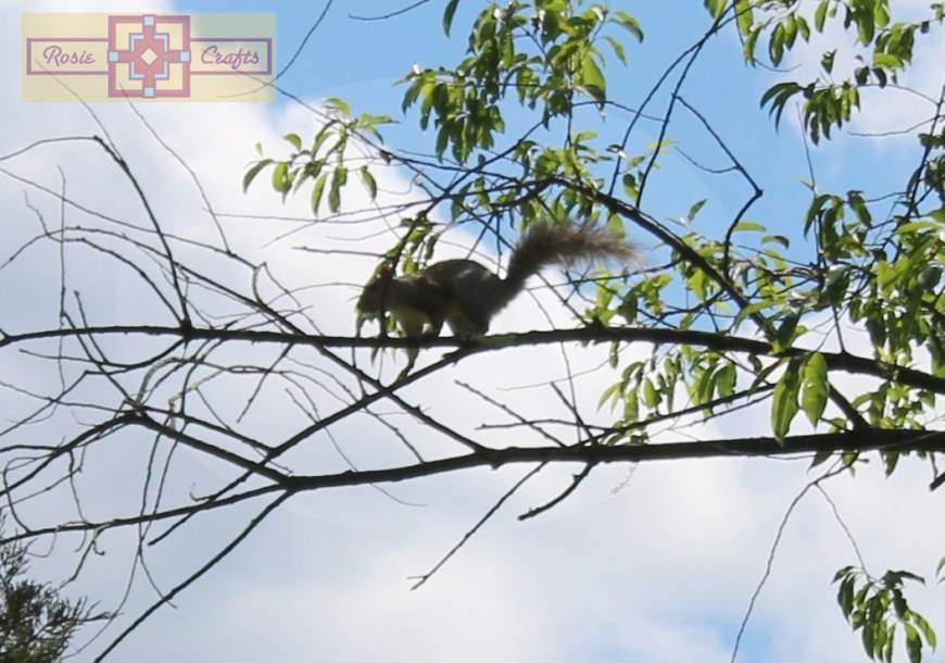 Rosie Crafts Squirrel Climbing Tree Photography