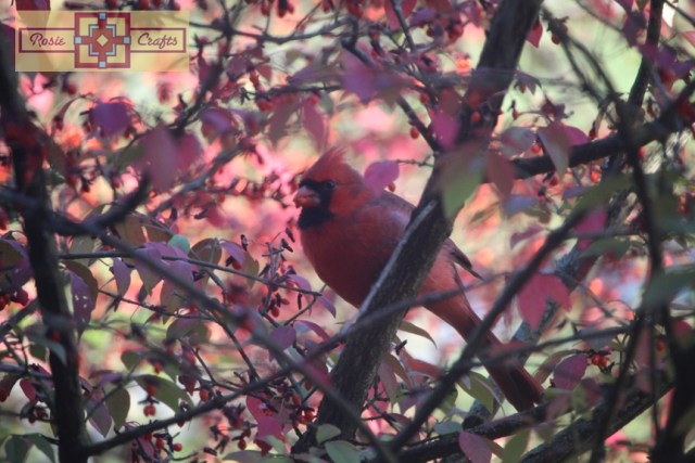 Rosie Crafts Male Cardinal Bird Perched in Berry Bush Photography
