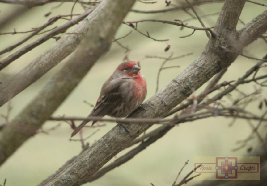 Rosie Crafts Finch Bird Perched In Berry Bush Photography