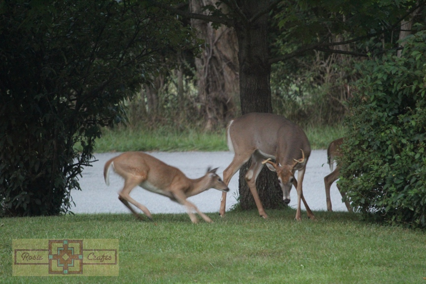 Rosie Crafts Deer Family Playing Photography