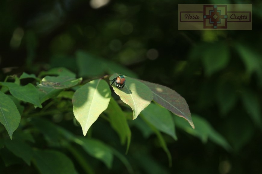 Rosie Crafts Beetle On Leaf Photography