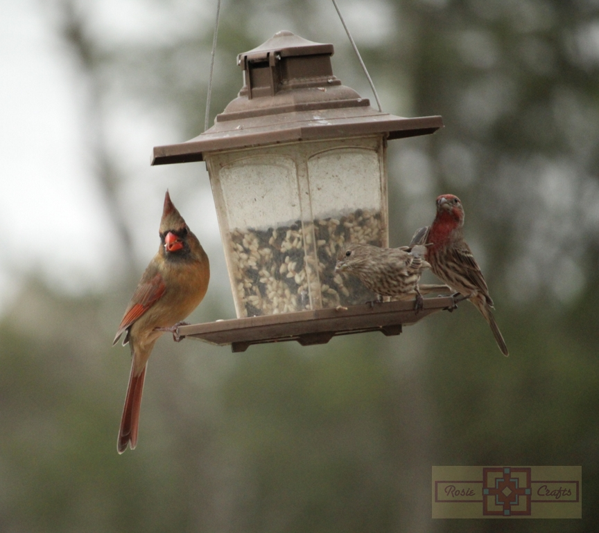 Rosie Crafts Female Cardinal and Finches Photography