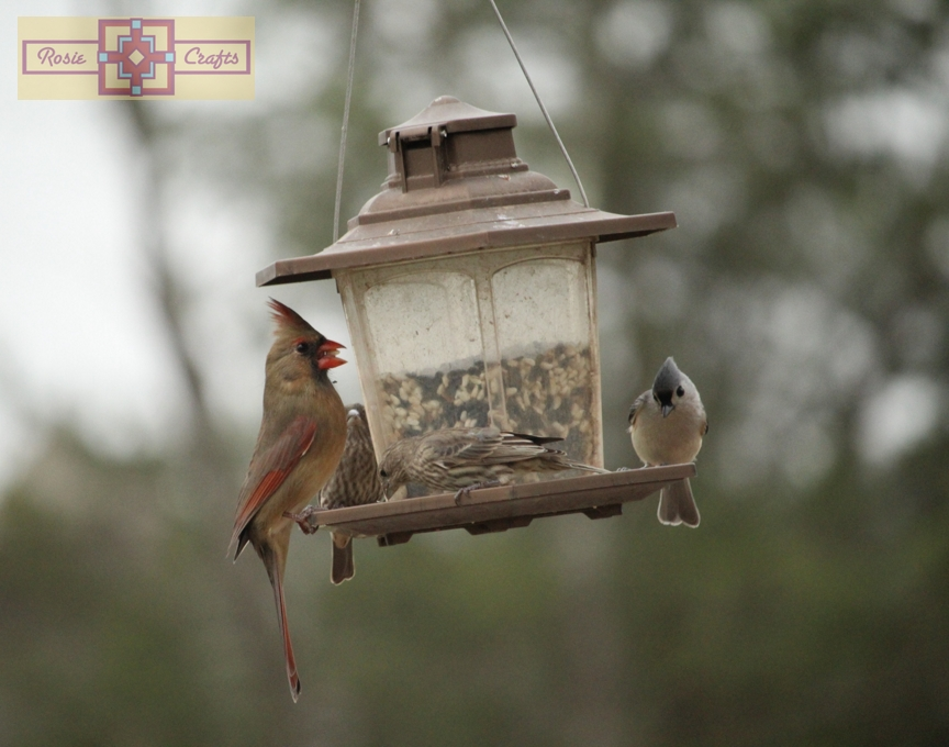 Rosie Crafts Female Cardinal, House Finch and Tufted Titmouse Photography