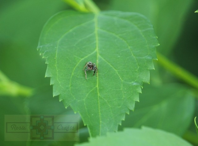 Rosie Crafts Spider on Leaf Photography