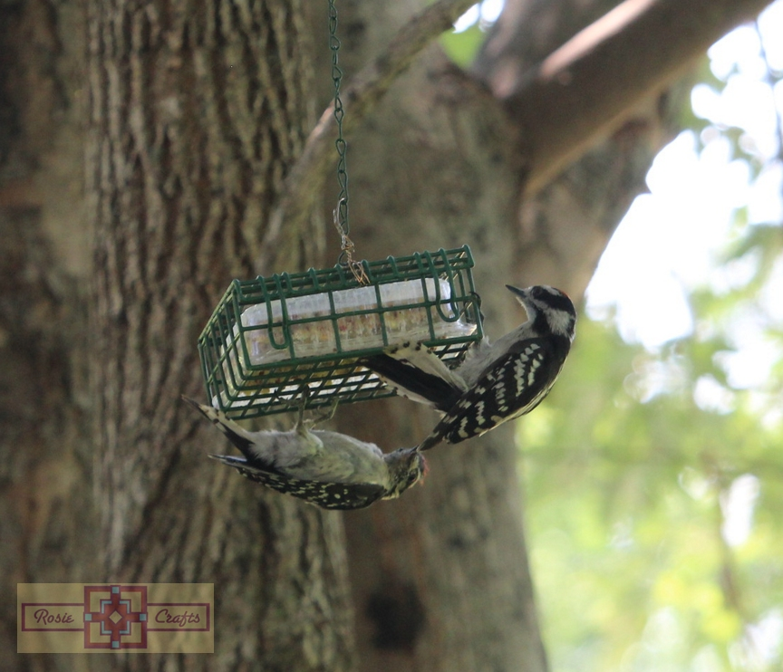 Rosie Crafts Male and Female Downy Woodpecker Photography