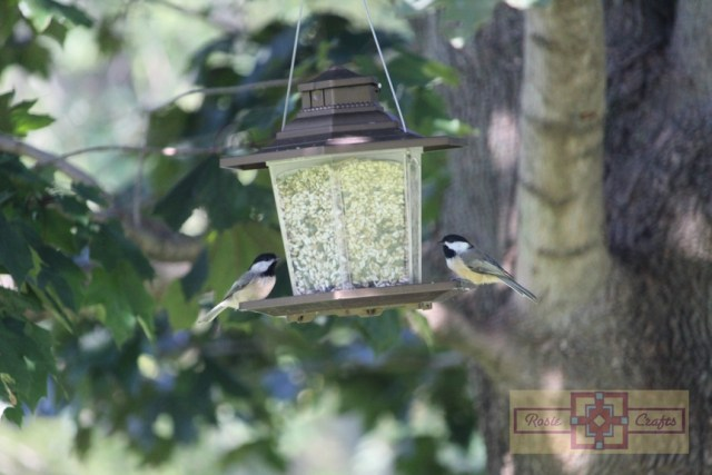 Rosie Crafts Chickadee Birds Perched on Feeder Photography
