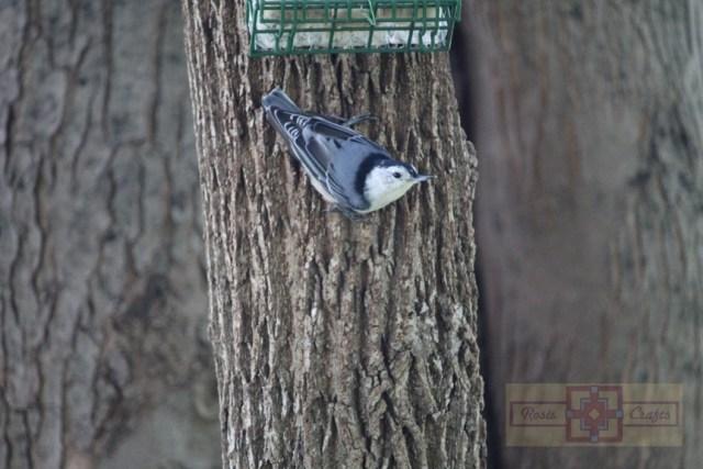 Rosie Crafts Nuthatch Bird Photography