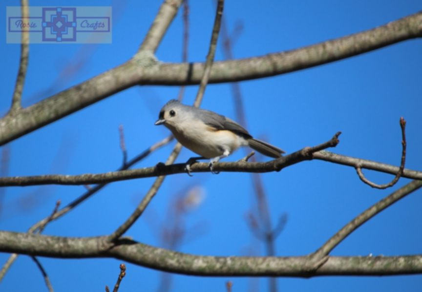 Rosie Crafts Tufted Titmouse Photography