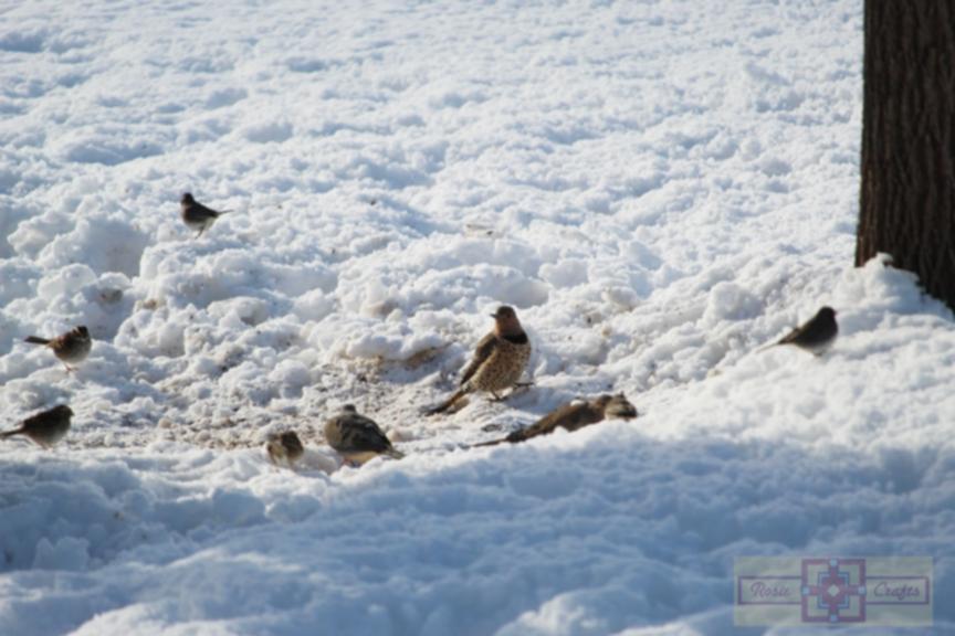 Rosie Crafts Northern Flicker Woodpecker In Snowy Winter White Photography
