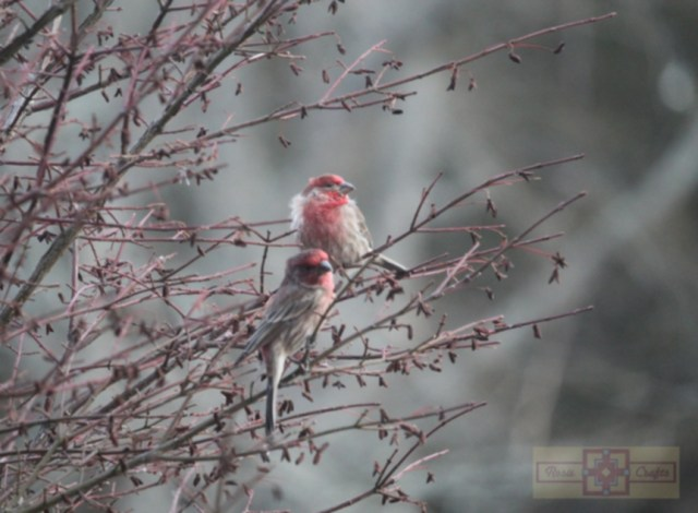 Rosie Crafts Finch Birds Perched In Berry Bush Photography