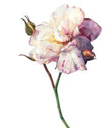 Flowers Rosie Sanders