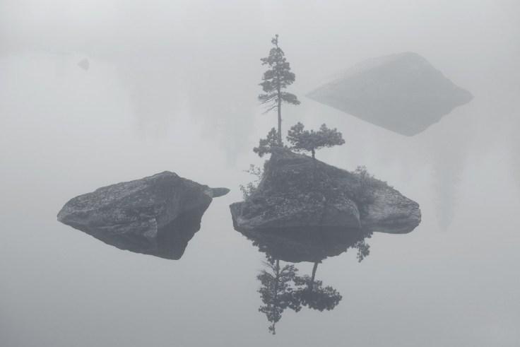 Сосна в тумане. Фото: Александр Ермолицкий