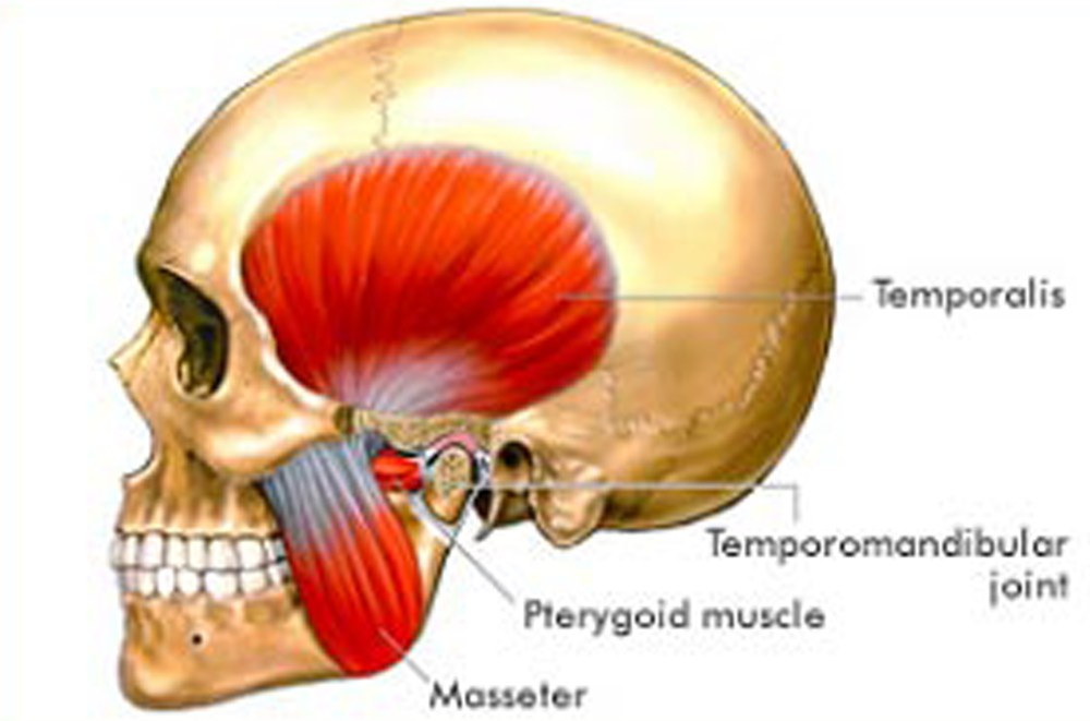 medium resolution of what is tmj