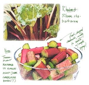 Rock Harbor Rhubarb