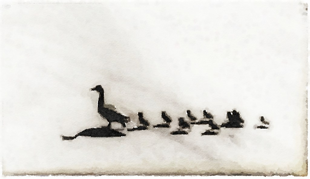 Make Way for Ducklings: mindful meditation on meandering mallards... (Source: Rosslyn Redux)
