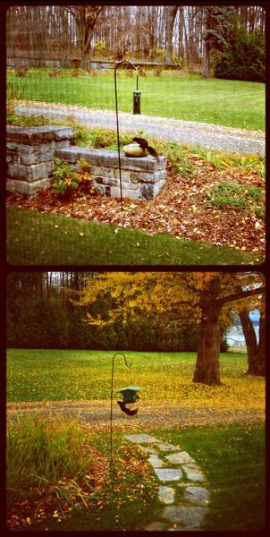 Adirondack Squirreling
