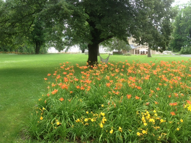 An old foundation filled to brimming with day lily blossoms at Rosslyn.