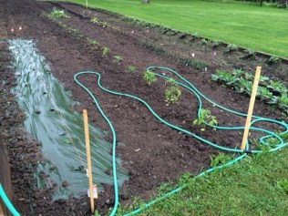 Garden Update: Soggy Friday the 13th