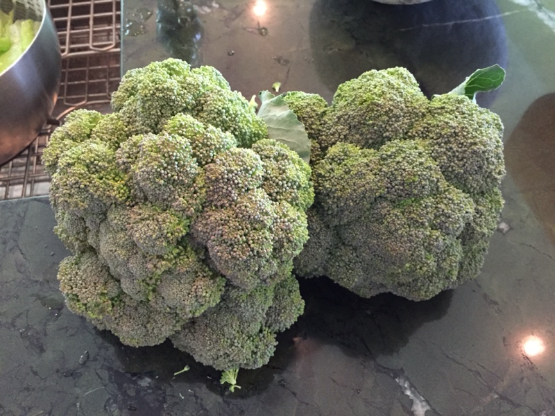 Garden Fresh Broccoli, July 2015