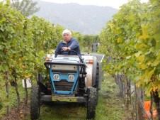 Heinz Frischengruber kümmert sich um den Abtransport der Trauben zum Keller