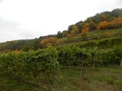 Die Weingärten am Goldberg