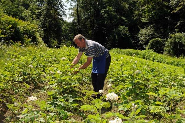 Nalserbacherkeller Nals Urlaub Auf Dem Bauernhof