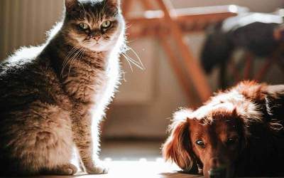 Come potenziare il sistema immunitario del tuo cane o gatto