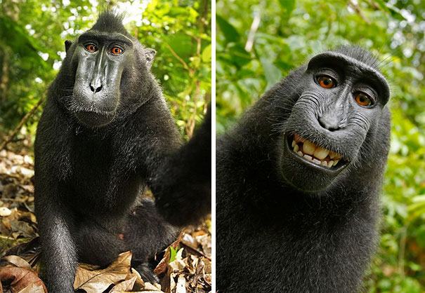 Selfies animais