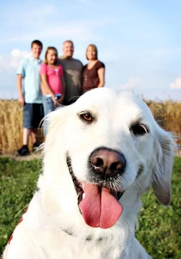 Cachorros aloprando selfies