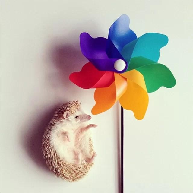 Conheça o ouriço mais fofo do mundo!