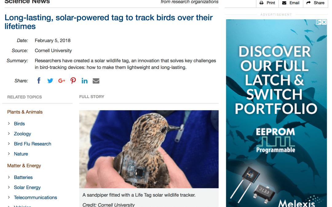 "Besenderte Großvögel als ""Basisstation"" für andere Vögel?"