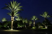 Palm Tree Ring Light - Roto-Lite, Inc - LED Landscape Lighting