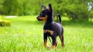 Awesome Dog Breeds