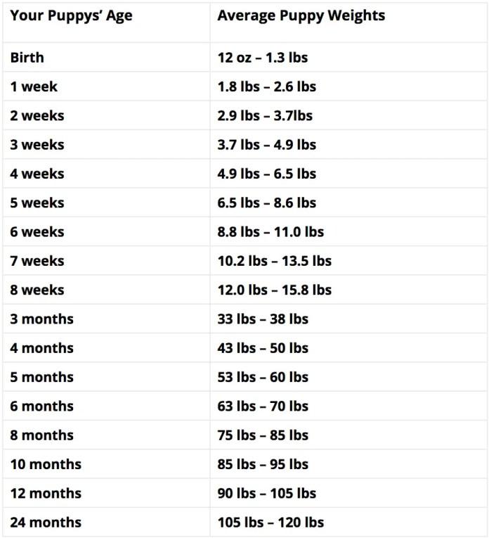Rottweiler Growth Chart and rottweiler Weight